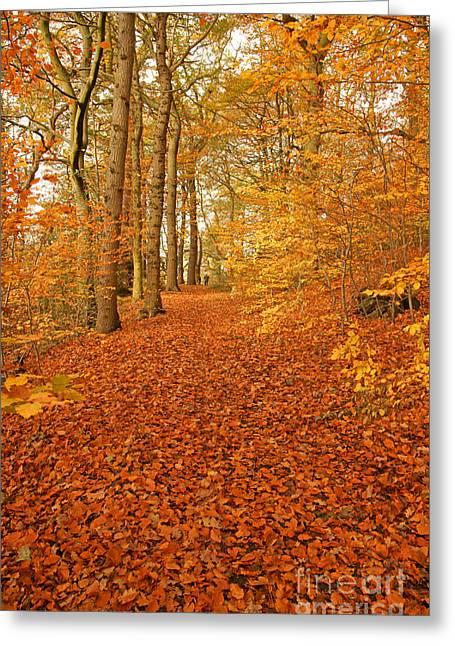 David Birchall Greeting Cards - Autumn woodland in Derbyshire Greeting Card by David Birchall