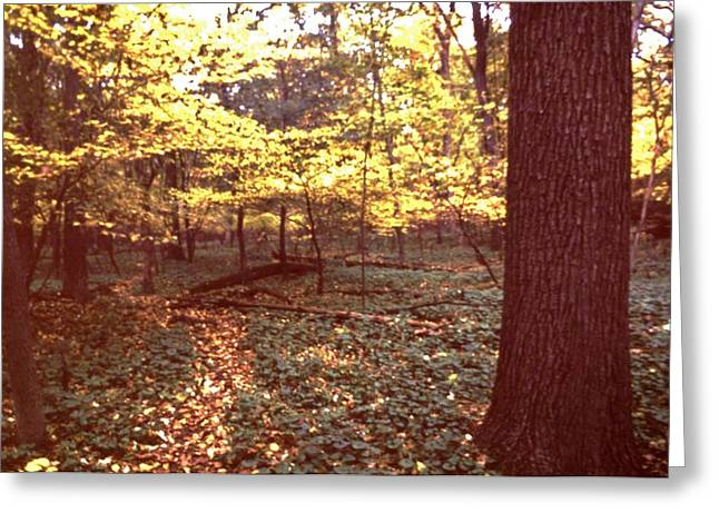 Indiana Autumn Greeting Cards - Autumn Woodland Path   Pokagon State Park  Indiana  Greeting Card by Rory Cubel