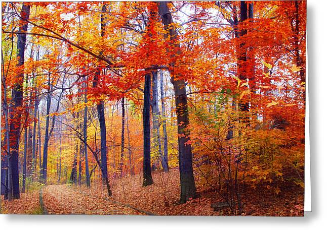 Red Leaves Digital Greeting Cards - Autumn Woodland Trail Greeting Card by Jessica Jenney