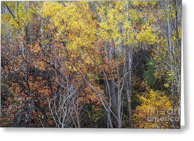 The Trees Greeting Cards - Autumnal color dance Greeting Card by Yuri Santin
