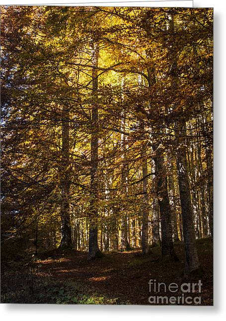 Nature Scene Greeting Cards - Autumnal forest Greeting Card by Yuri Santin