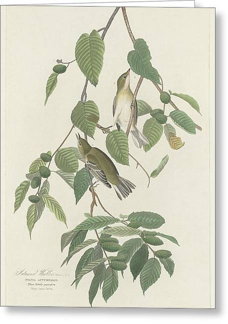 Warblers Greeting Cards - Autumnal Warbler Greeting Card by John James Audubon