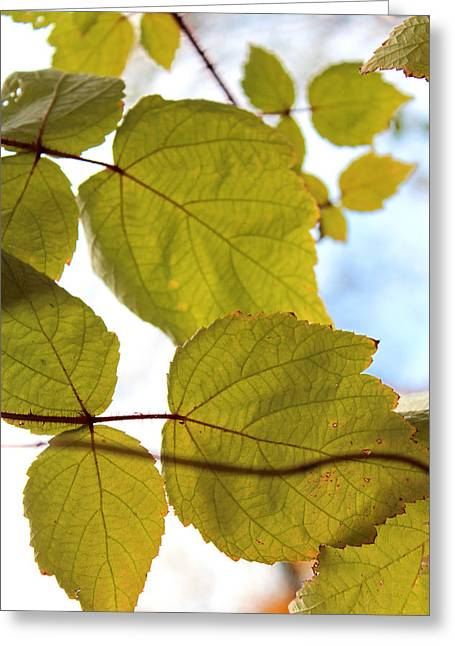 Subtle Colors Greeting Cards - Autumns Approach Greeting Card by Carolyn Rie