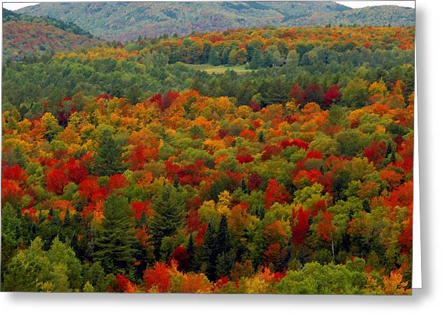 Scenic Artwork Greeting Cards - Autumns colors Greeting Card by David Lee Thompson