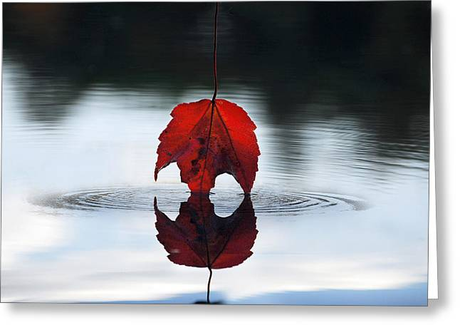 Reflections Of Sky In Water Digital Greeting Cards - Autumns Final Descent Greeting Card by William Carroll
