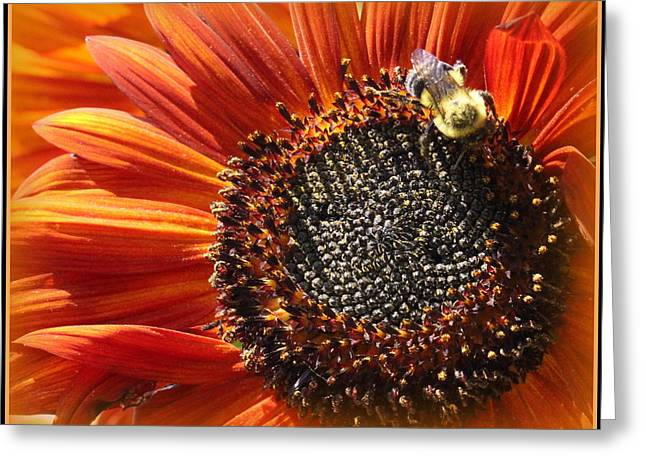 Botanical Greeting Cards - Autumns Sunflower Greeting Card by  Photographic Art and Design by Dora Sofia Caputo