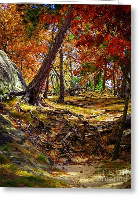 Autumn's Tangled Root Path Greeting Card by Stephanie Forrer-Harbridge