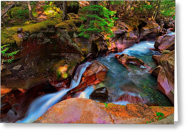 Glacier National Park Greeting Cards - Avalanche Creek Greeting Card by Greg Norrell