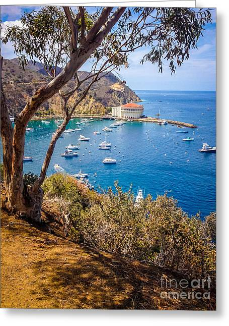 Ariel Greeting Cards - Avalon Bay Catalina Island Picture Greeting Card by Paul Velgos