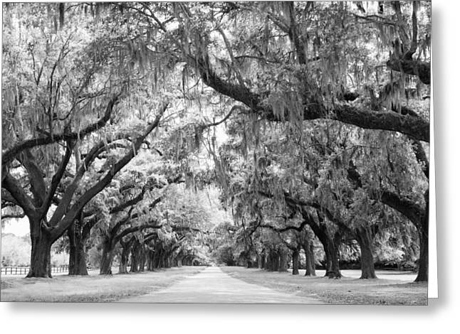 Live Art Greeting Cards - Avenue of Oaks Charleston South Carolina Greeting Card by Stephanie McDowell