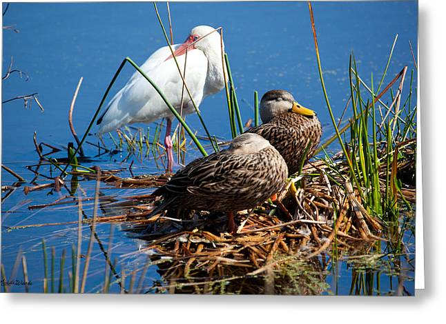 Green Cay Greeting Cards - Avian Siesta Time at Green Cay Boynton Beach Florida Greeting Card by Michelle Wiarda