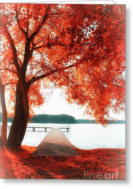 Trees In Autumn Greeting Cards - Aw 2 Greeting Card by SK Pfphotography