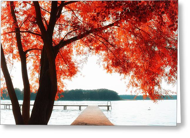Trees In Autumn Greeting Cards - Aw Greeting Card by SK Pfphotography