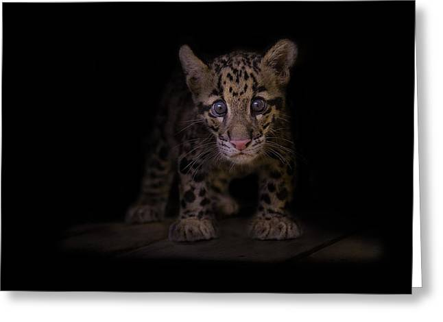 Felines Photographs Greeting Cards - Awestruck Greeting Card by Ashley Vincent