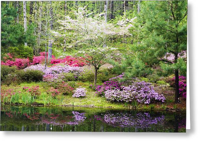 Chatham Greeting Cards - Azalea Heaven Greeting Card by Eggers   Photography