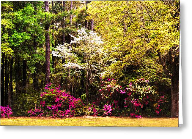 Canon 40d Greeting Cards - Azaleas Blooming Greeting Card by Terry Shoemaker