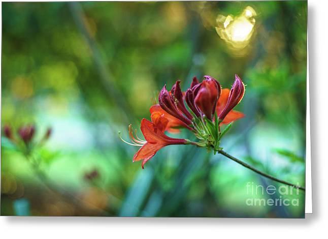 Azaleas Golden Sunspot Greeting Card by Mike Reid