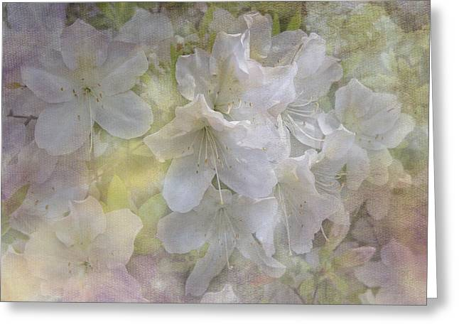 Tn Greeting Cards - Azaleas in the Spring Greeting Card by TN Fairey