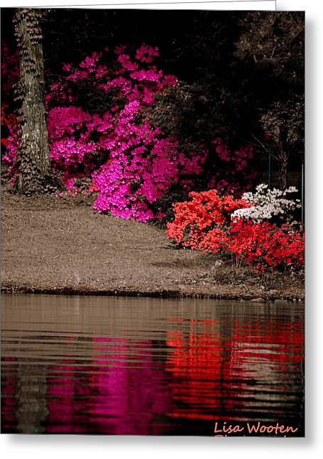 White Greeting Cards - Azaleas Selective Coloring Greeting Card by Lisa Wooten