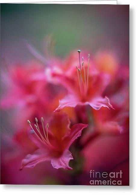 Azaleas Soft Flowers Details Greeting Card by Mike Reid