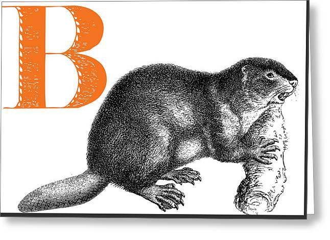 B Beaver Greeting Card by Thomas Paul
