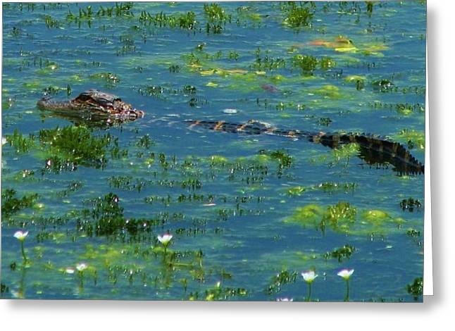 Baby Alligator  Greeting Card by M J