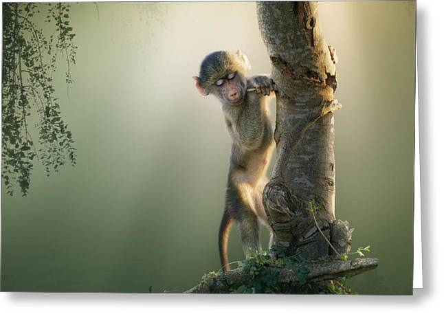 Backlit Greeting Cards - Baby Baboon in Tree Greeting Card by Johan Swanepoel