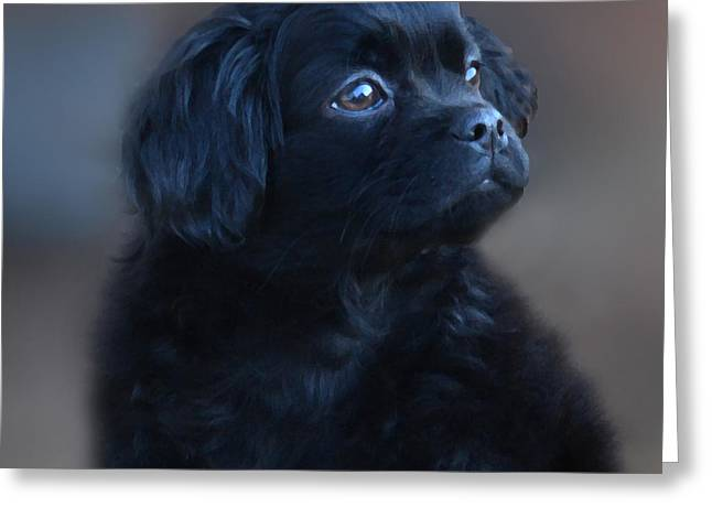 Puppies Digital Greeting Cards - Baby BernardO Greeting Card by Mike  Quesinberry