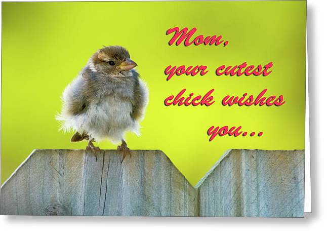 Sparrow Greeting Cards - Baby bird Greeting Card by Betty LaRue