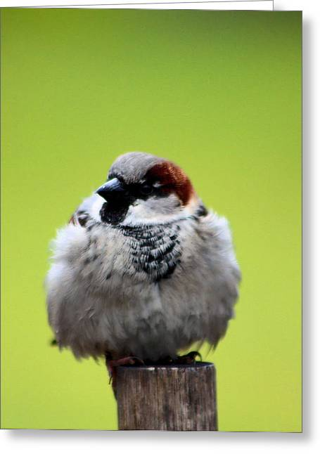 Baby Bird Greeting Cards - Baby Bird Greeting Card by Nick Gustafson