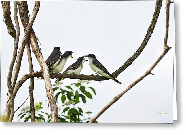 Three Chicks Greeting Cards - Baby Birds - Eastern Kingbird Family Greeting Card by Christina Rollo
