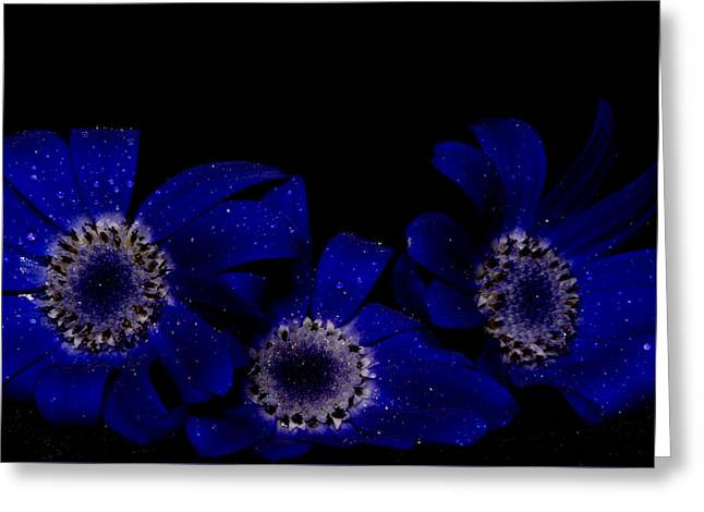 Senetti Photographs Greeting Cards - Baby Bloomers Greeting Card by Glen  Towler