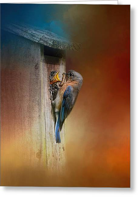 Baby Bird Greeting Cards - Baby Bluebird Breakfast Greeting Card by Jai Johnson