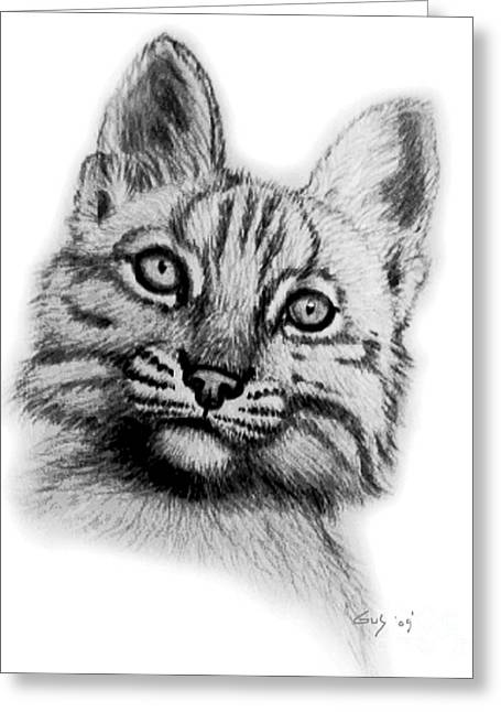 Baby Kitten Art Drawings Greeting Cards - Baby Bobcat Greeting Card by Nick Gustafson