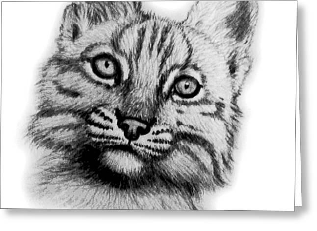 Baby Bobcat Greeting Card by Nick Gustafson