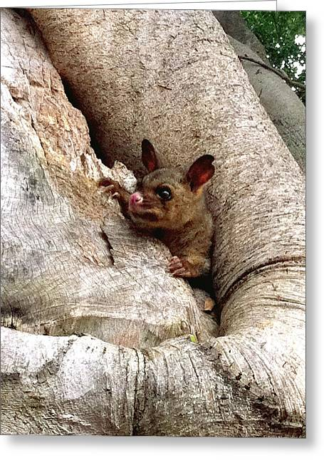 Baby Brushtail Possum Greeting Card by Darren Stein