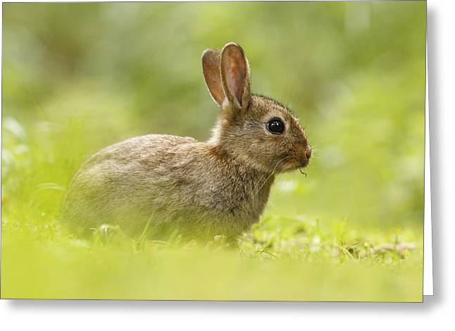 Juvenile Mammals Greeting Cards - Baby Bunny Having Lunch Greeting Card by Roeselien Raimond
