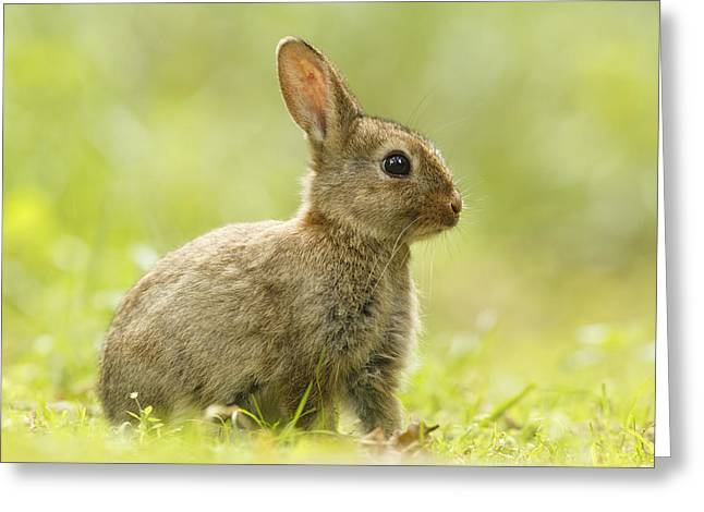 Juvenile Mammals Greeting Cards - Baby Bunny in the Grass Greeting Card by Roeselien Raimond