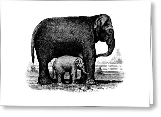Baby Elephant T-shirt Greeting Card by Edward Fielding