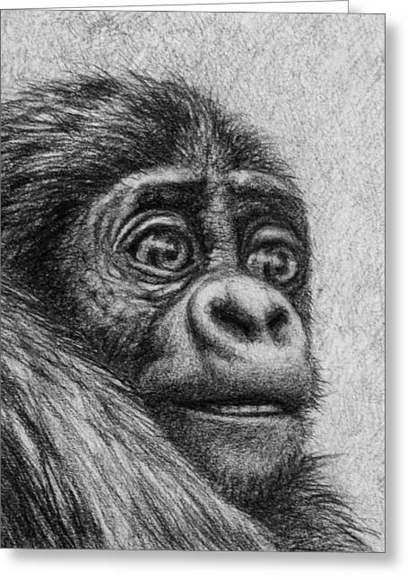 Gorilla Drawings Greeting Cards - Baby Gorilla Greeting Card by Svetlana Ledneva-Schukina