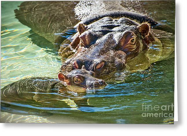 Closeness Greeting Cards - Baby Hippo Paradise Greeting Card by Jamie Pham