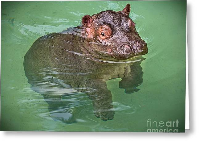 Closeness Greeting Cards - Baby Hippo Pool Greeting Card by Jamie Pham
