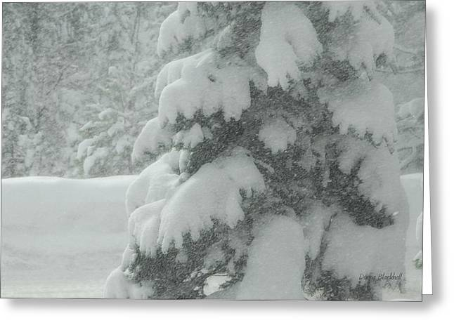 Snow On Trees Greeting Cards - Baby Its Cold Outside Greeting Card by Donna Blackhall