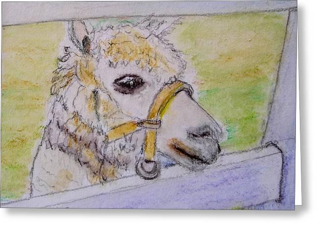Llama Drawings Greeting Cards - Baby Llama Greeting Card by Lessandra Grimley
