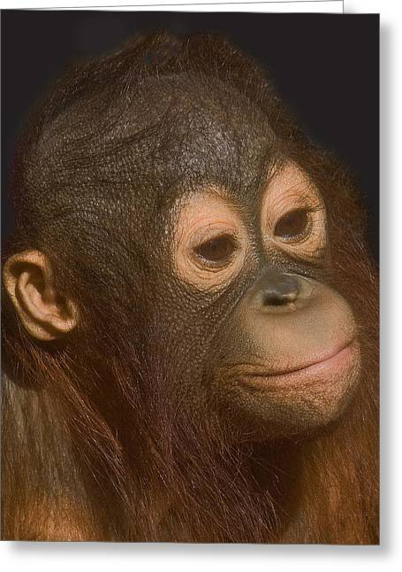Orang-utans Greeting Cards - Baby Orang-utan Greeting Card by Larry Linton