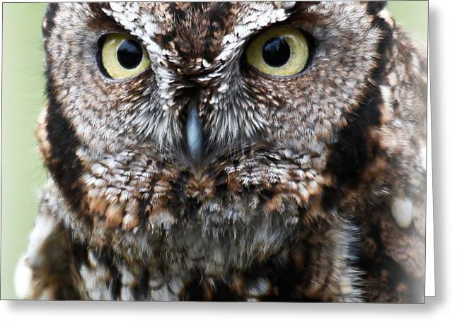Baby Owl Eyes Greeting Card by Athena Mckinzie