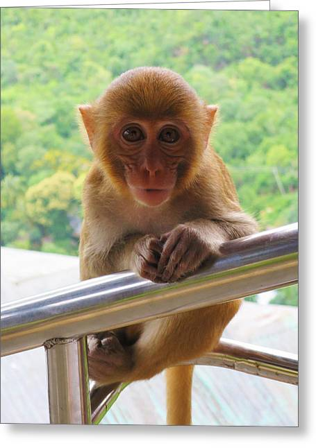 Mount Popa Greeting Cards - Baby Picture Greeting Card by Scott Brindle
