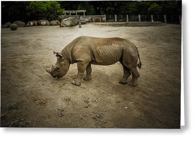 Michelle Greeting Cards - Baby Rhino Greeting Card by Michelle Saraswati