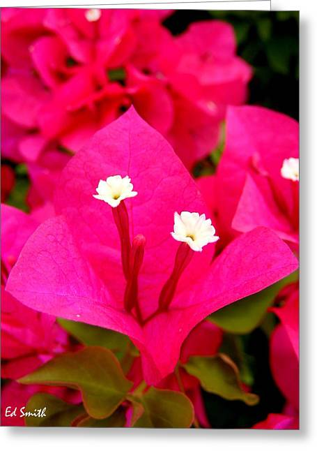 Indiana Flowers Digital Art Greeting Cards - Baby Sisters Greeting Card by Ed Smith