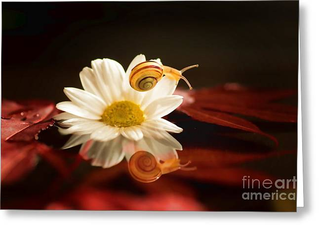 Kinderzimmer Greeting Cards - Baby Snail on a flower in the water  Greeting Card by Tanja Riedel